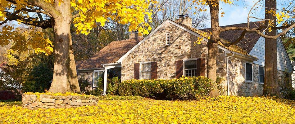 3 Reasons Leaves Have to Be Removed from Lawns