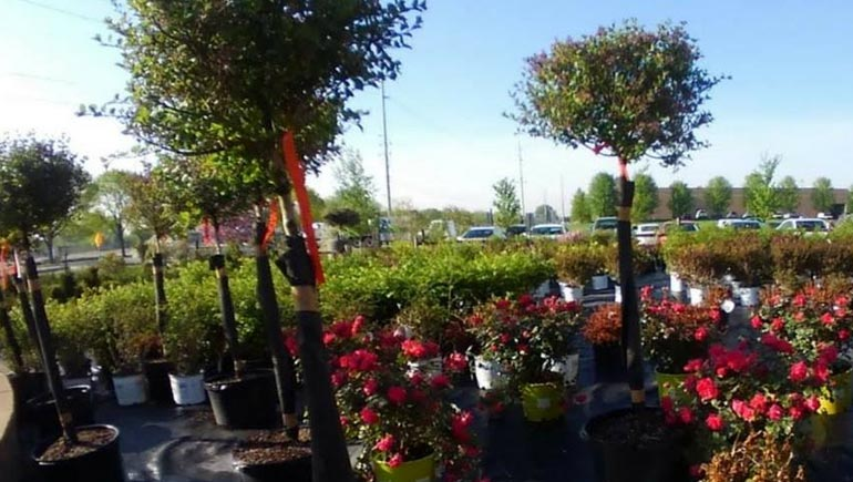 Our garden center plants and shrubs.