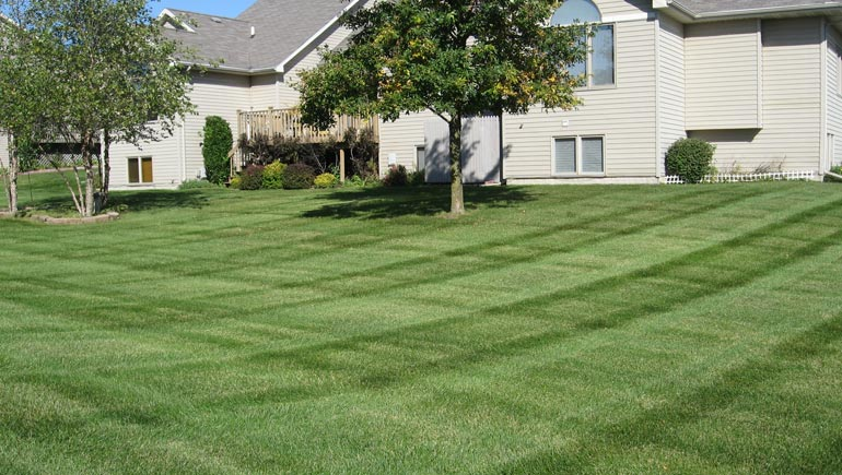 Residential lawn mowed and maintained by our team at A+ Lawn & Landscape.