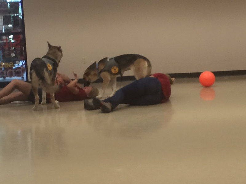 Fun and games with the animal rescue 4-legged visitors at the A+ Lawn & Landscape office.