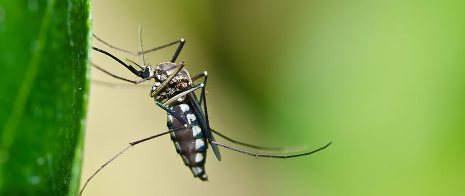 How Do You Get Rid of Mosquitoes in Your Yard? | A+ Lawn ...