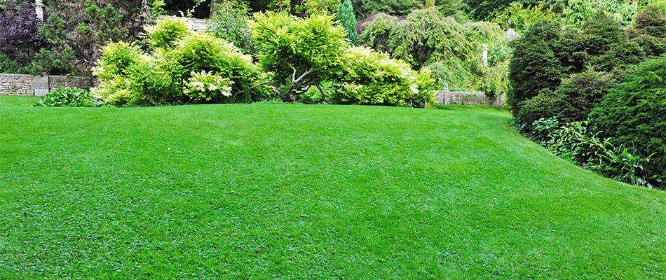A healthy, green lawn in Ankeny, IA.