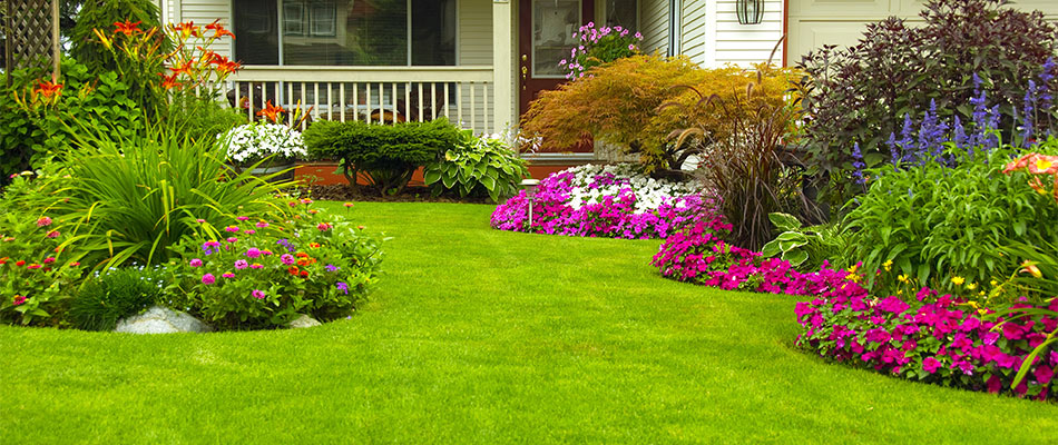 Benefits of Adding Annual Flowers to Your Lawn