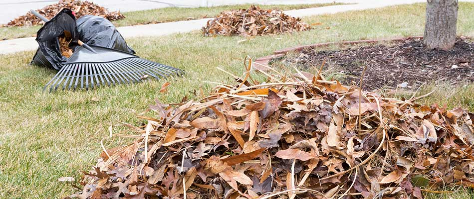 Leaf Mulching or Leaf Removal: What's Best for Des Moines Lawns