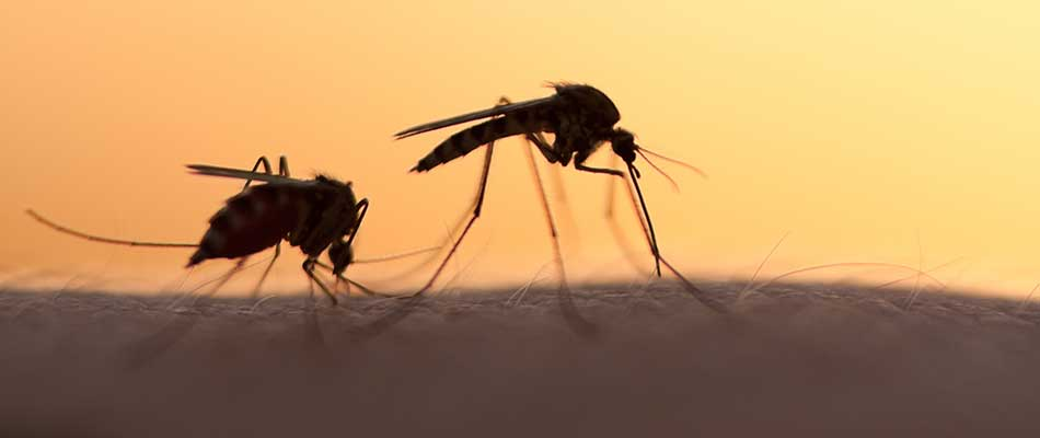 The Importance of Mosquito Control for Your Property