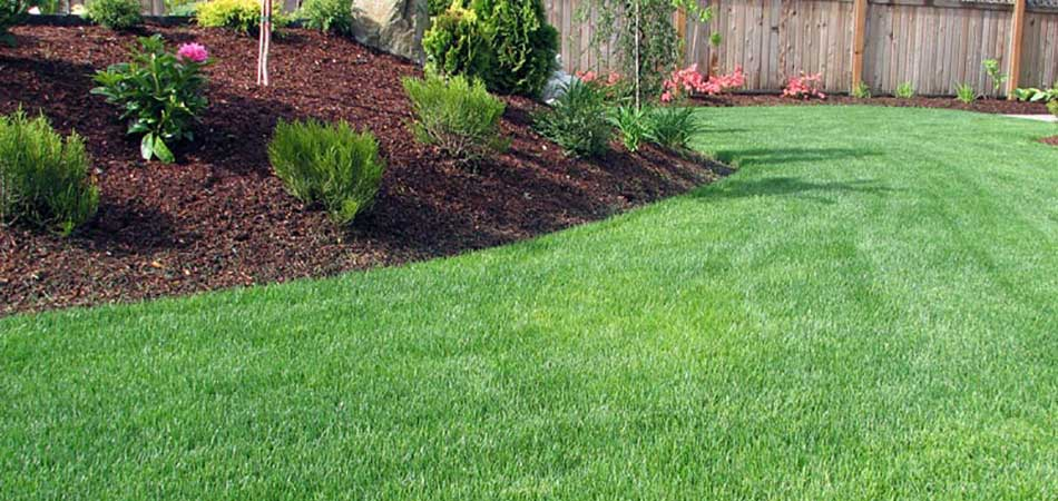 What Services Must Be Done to Ensure Your Lawn Succeeds in 2019