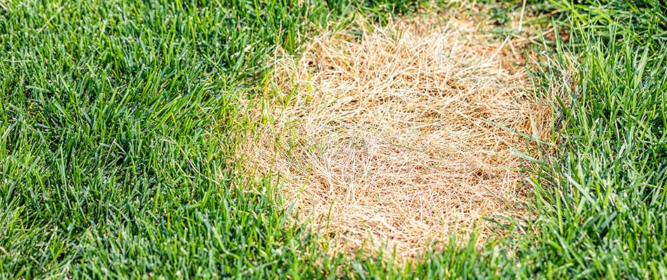 What to Do if You See a Brown Patch in Your Yard