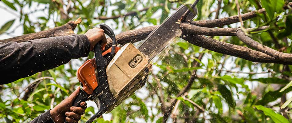 Landscape worker removing dead branch with a chainsaw in Ankeny, IA.