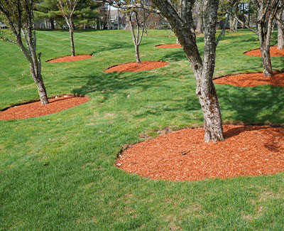 Mulch installed around trees at an HOA community in Des Moines, IA.