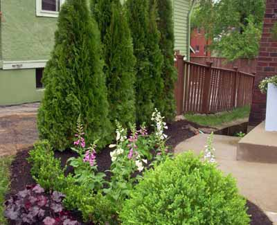 Prime examples of healthy small trees and shrubs in the yard of a Des Moines homeowner.