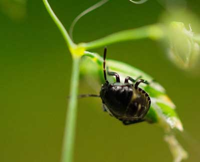 In order to avoid insect infestations it is vital to schedule insect control services from A+ Lawn & Landscape.