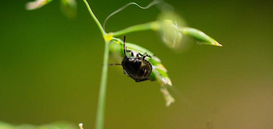 West Des Moines lawns that use the organic program from A+ Lawn & Landscape develop a greater insect resistance.