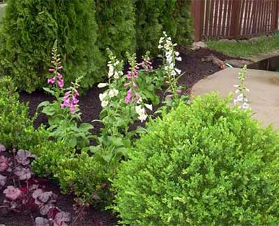 A landscaped plant bed with mulch and shrubs in Des Moines, IA.