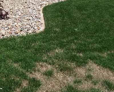 This residential lawn in Des Moines is in need of disease and fungus control services.