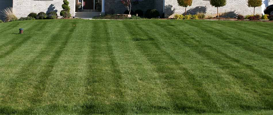 Mowing stripes on a home lawn in Des Moines, IA.