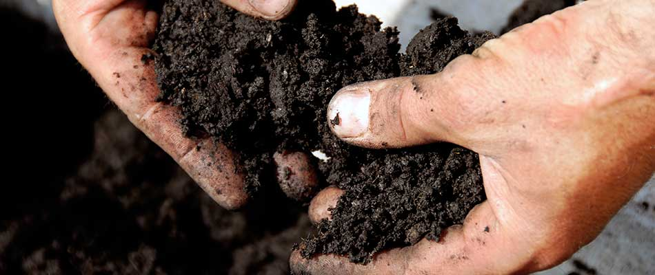 Why We Recommend Soil Testing for Our Customers