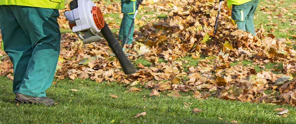 Winter Landscaping Care: Protecting Your Landscaping Investments