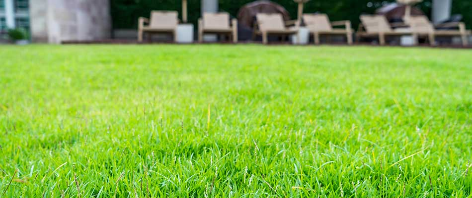 Healthy home lawn with our organic treatment program in Des Moines, IA.